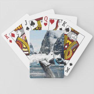 Nordlig puckelrygg spel kort