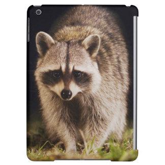 Nordlig Raccoon, Procyonlotor, vuxen på