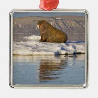 Norge Svalbard, Edgeoya ö, valross Julgransprydnad Metall