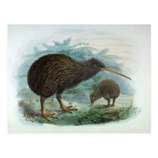 Norr illustration för fågel för vintage för vykort