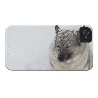 Norska Elkhound Case-Mate iPhone 4 Skal