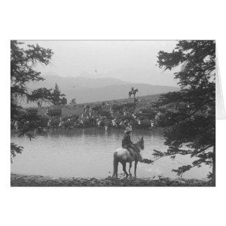Nötkreatur vid ett damm med två cowboys hälsningskort