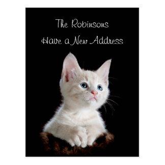 Ny adress gullig kattunge vykort