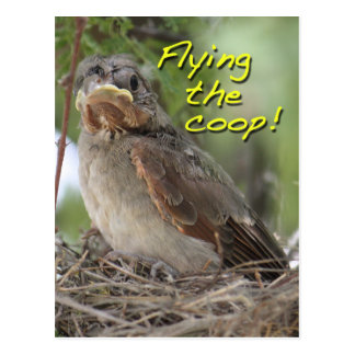 Ny adress nybörjarefågel vykort