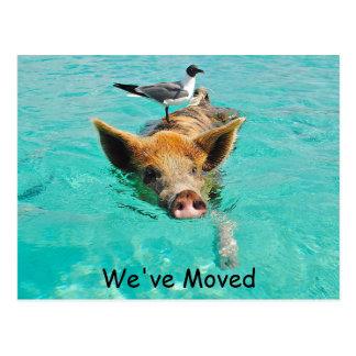 Ny adress simninggris vykort