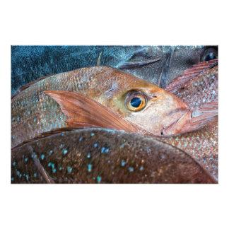 Ny fisk på en marknadsföra fototryck