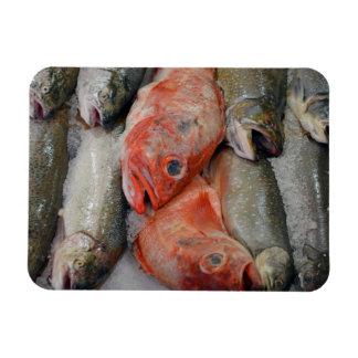 Ny fisktryckmagnet magnet