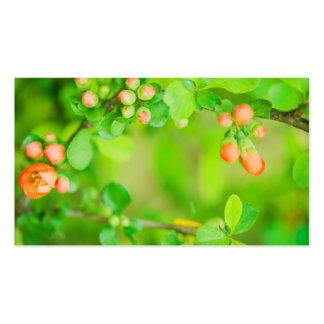 Ny grönt och röda blommor set av standard visitkort