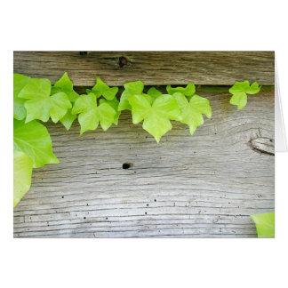 Ny murgröna, gammalt trä hälsningskort
