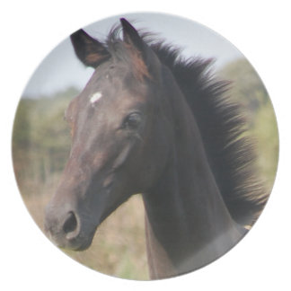 Ny ponny/häst tallrik
