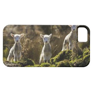 Nyazeeländsk södra ö, Fiordland medborgare Barely There iPhone 5 Fodral