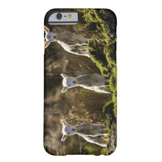 Nyazeeländsk södra ö, Fiordland medborgare Barely There iPhone 6 Skal