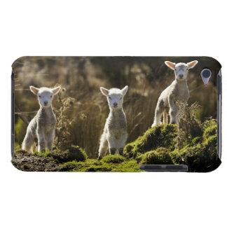 Nyazeeländsk södra ö, Fiordland medborgare Barely There iPod Skydd
