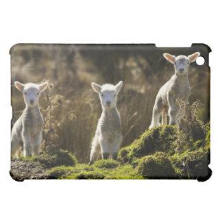 Nyazeeländsk södra ö, Fiordland medborgare iPad Mini Skal