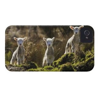 Nyazeeländsk södra ö, Fiordland medborgare iPhone 4 Skydd