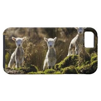 Nyazeeländsk södra ö, Fiordland medborgare iPhone 5 Case-Mate Skal