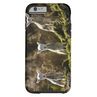 Nyazeeländsk södra ö, Fiordland medborgare Tough iPhone 6 Case