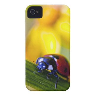 Nyckelpigan på korsört blommar fodral för iPhone 4 Case-Mate iPhone 4 Fodral