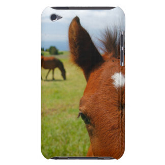 Nyfiken colt barely there iPod cover