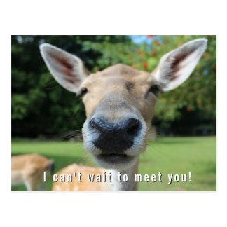 Nyfiken hjort kan inte väntan att möta som dig, vykort