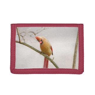Nyfiken kvinnlig huvudsaklig plånbok