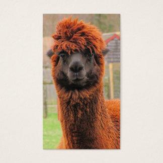 Nyfiket kort för Alpaca~-affärer