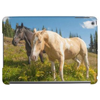 Nyfikna hästar som foraging på gräs