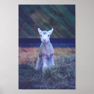 Nyfödd Lamb Print