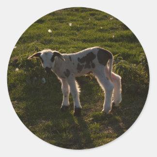 Nyfödd lamb runt klistermärke