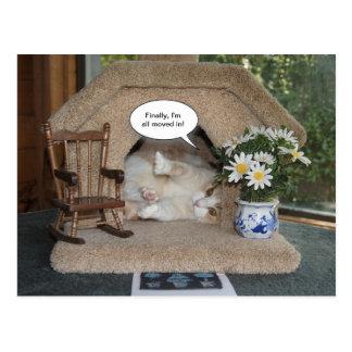 Nytt adress rört för rolig katt vykort