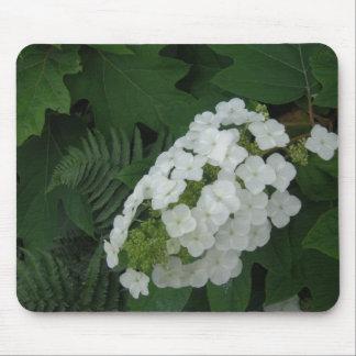 Oakleaf vanlig hortensia och Fern Musmatta