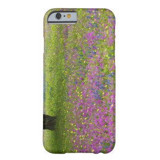 Oakträd med fält av phloxen, blått sätta på en barely there iPhone 6 skal