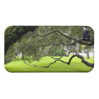 Oakträd på ön för St. Simons iPhone 4 Skydd