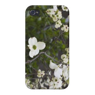 Oavkortad blom för Dogwoodträd iPhone 4 Skydd