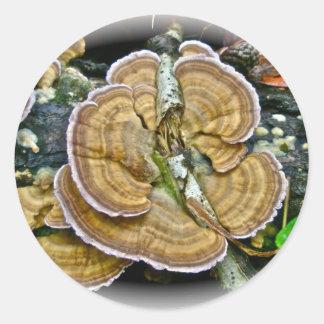 Objekt för svamp för lilakanthylla koordinerande runt klistermärke