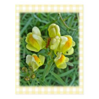 Objekt för vildblomma för smör'n-ägg koordinerande vykort