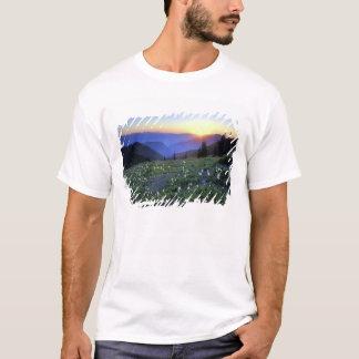 Obstruciton pekar solnedgången, OS:en NP, WA, USA T Shirts