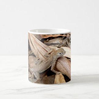 Ödla i den torra lövmuggen kaffemugg