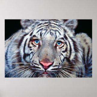 Öga av tigeraffischen poster
