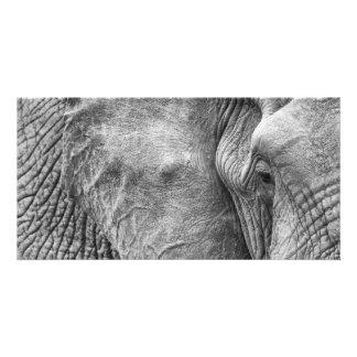Ögat av en elefant fotokort