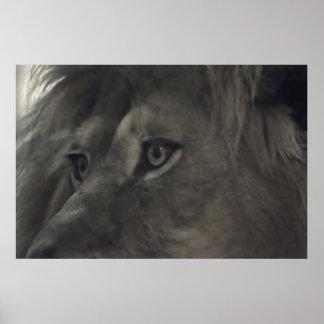 Ögonen av de lejona 2na poster