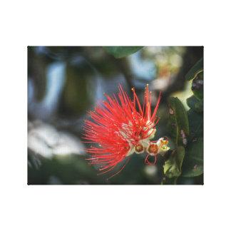 Ohia Lehua blommar Canvastryck