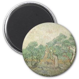 Olivgrön plockning av Vincent Van Gogh, Magnet