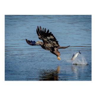 Omogen örn som tappar en fisk vykort