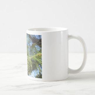 Omogna manlig- eller pollenkottar av grästräd kaffemugg