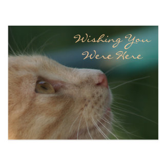Önska dig var här vykort
