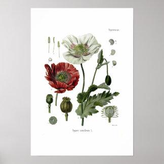 Opiumvallmo Poster