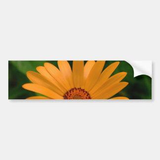 Orange afrikansk daisy bildekal
