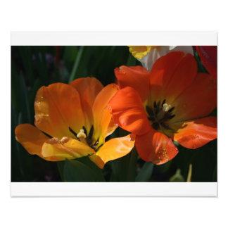orange blom- tryck 20x16 fotografier
