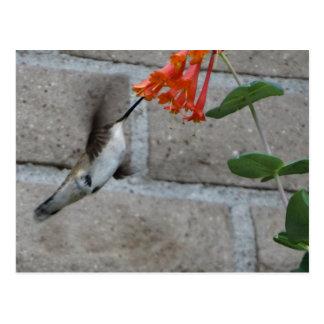 Orange blommaHummingbird Vykort